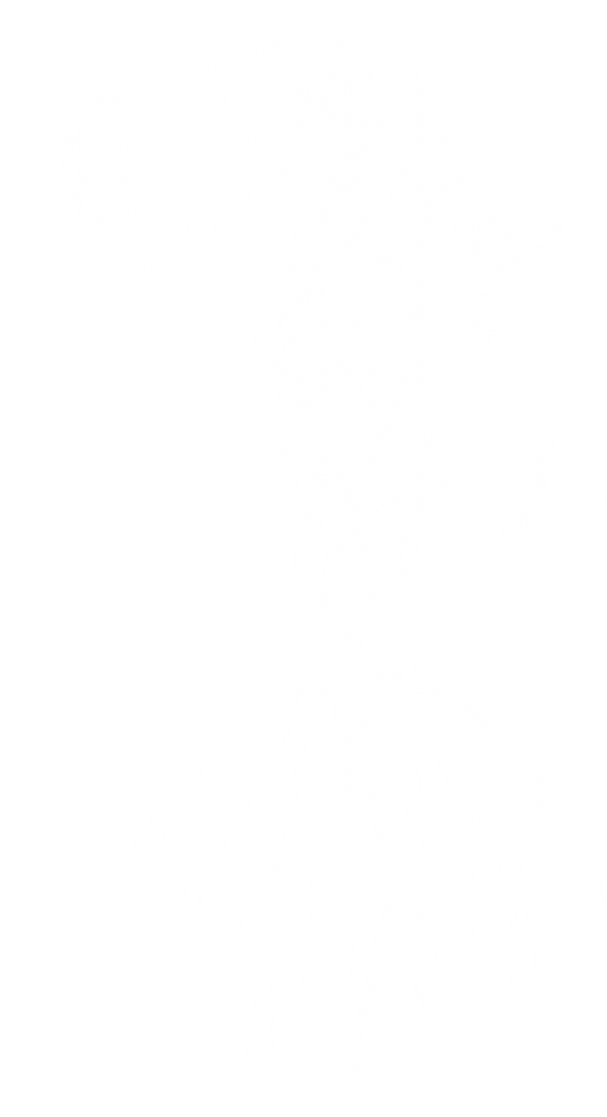 Roots in Africa